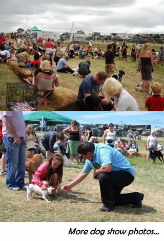 COMPANION DOG SHOW - PEDIGREE & NOVELTY CLASSES